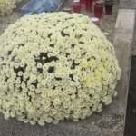groblje 035