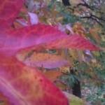 jesen 11