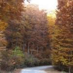 jesen 18