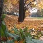 jesen 7