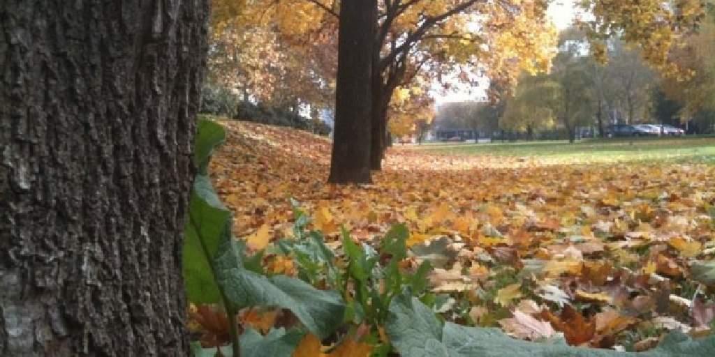 Boje jeseni !- fotogalerija