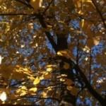 jesen 9